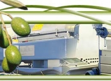 Olive oil Business for sale in Limassol