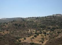 Land for sale in Vavla village